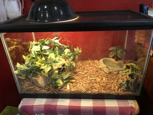 10 gallon reptile aquarium ( full set up ) for Sale in Santa Clarita, CA