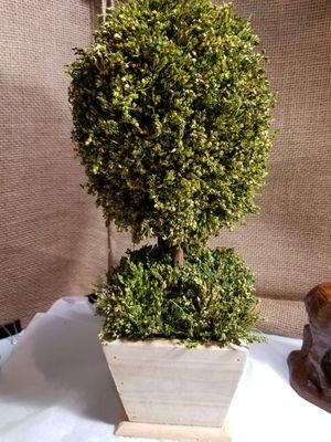 Topiary/ arbolito for Sale in Hialeah, FL