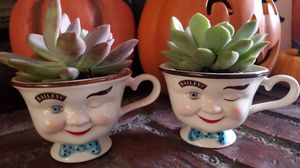 Live Succulent plants in doll head cups for Sale in Whittier, CA
