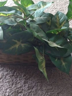 Fake House Plant for Sale in Berea,  OH