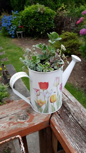Colorful Metal Watering Can Full of Succulent Plants Arrangement for Sale in Sumner, WA