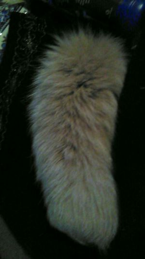 FOXTAIL FOR SALE $5 for Sale in Milton, FL