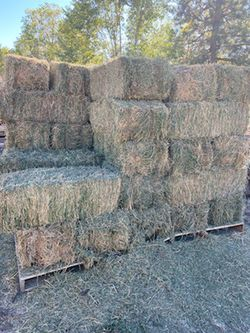 Alfalfa $10/bale for Sale in Naches,  WA