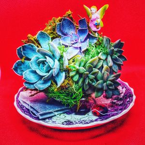 Succulent Teacup Display for Sale in Vancouver, WA