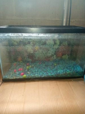 10 gallon fish tank for Sale in Eastpointe, MI