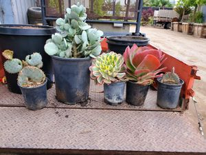 Succulent plants for Sale in Riverside, CA