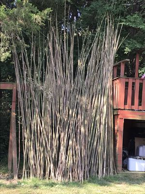 Bamboo to sell for Sale in Smyrna, TN