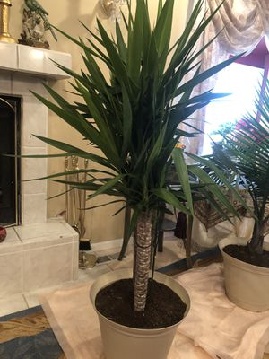 Indoor plants for Sale in Littleton, CO