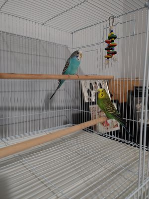 Bird cage for sale for Sale in Lynwood, CA