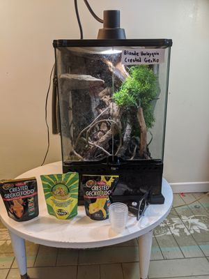 Crested gecko for Sale in Solana Beach, CA