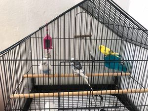 Parrots/birds with cage and food for Sale in Queens, NY