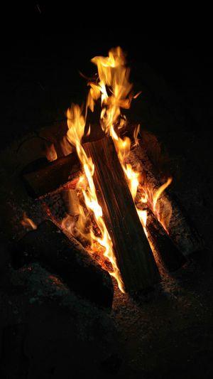 Best Firewood Dry Hardwood for Sale in Oceano, CA