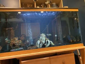 Will take any size fish tank you don't want and give$ for Sale in Hicksville, NY