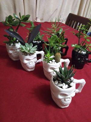 Succulents en calaveritas de cerámica pequeños$5Each for Sale in South Gate, CA
