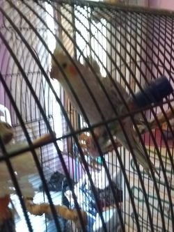 Free Bird And Cage for Sale in Graham,  WA
