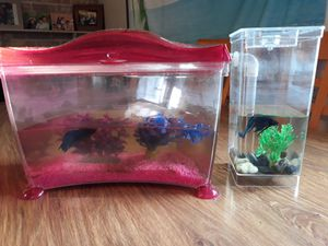 Two fish tanks and two betta fishes all for $20. for Sale in West Covina, CA