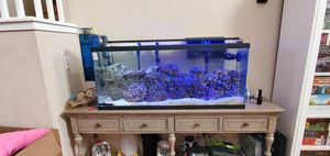 Salt Water Tank with Beautiful Fish, Roti System and Protein Skimmer for Sale in Antioch, CA
