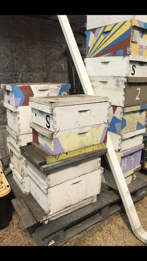 8 frame bee hive boxes and supers for Sale in Stockton, CA