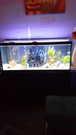 80 galon Fish tank with everything for Sale in Wheaton, IL