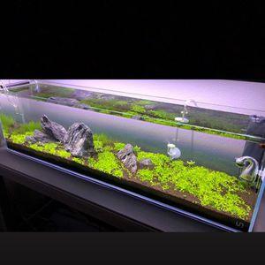 Super Clean Rimless Aquarium nano Peninsula Cube for Sale in Chino, CA