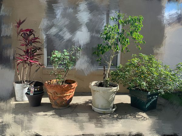 Free plants/garden flowers and pots