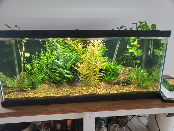75 gal Fresh water planted aquarium everything included