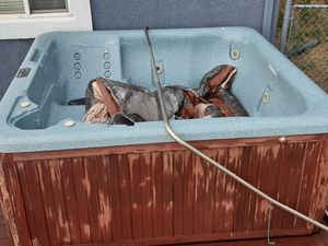 Sweetwater Spas Hot Tub for Sale in Colorado Springs, CO