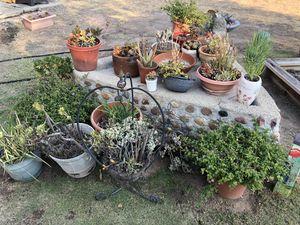 Plants for Sale in La Mesa, CA