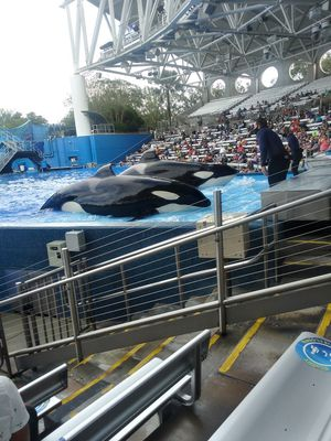 Two single day Seaworld tickets for Sale in Zephyrhills, FL