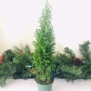 "16"" European Pine Tree for Sale in San Francisco, CA"