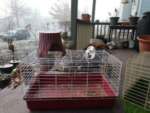 Kaytee Small Animal Guinea Pig Set Up for Sale in Columbus, OH