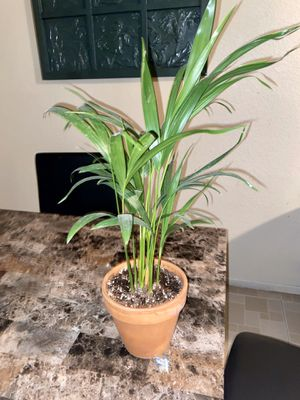 Plant for Sale in Henderson, NV