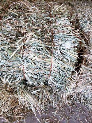 Wheat hay bales for Sale in Oakdale, CA