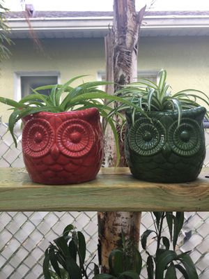 Two Spider Hoots for Sale in Kissimmee, FL