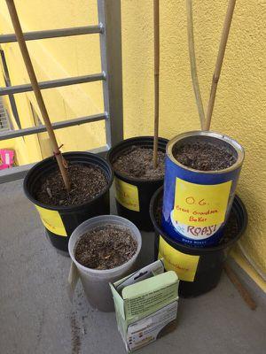 Plant stuff for Sale in Austin, TX
