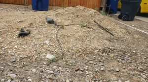 Free dirt must pick up for Sale in Albuquerque, NM