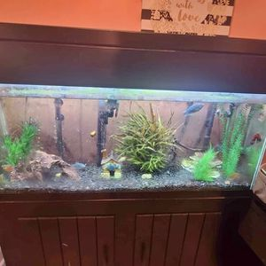 50 Gallon Tank With Stand for Sale in Glen Burnie, MD