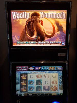 Woolly Mammoth IGT AVP Casino/Arcade Software for Sale in Vero Beach, FL