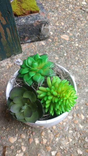 Artificial succulent for Sale in Minter, AL