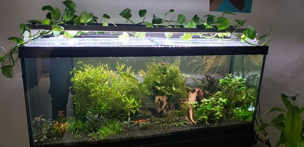 Aquarium, and lights 75g with a sump. 2x lights and a $1000 worth of extras Great but must go so act fast!