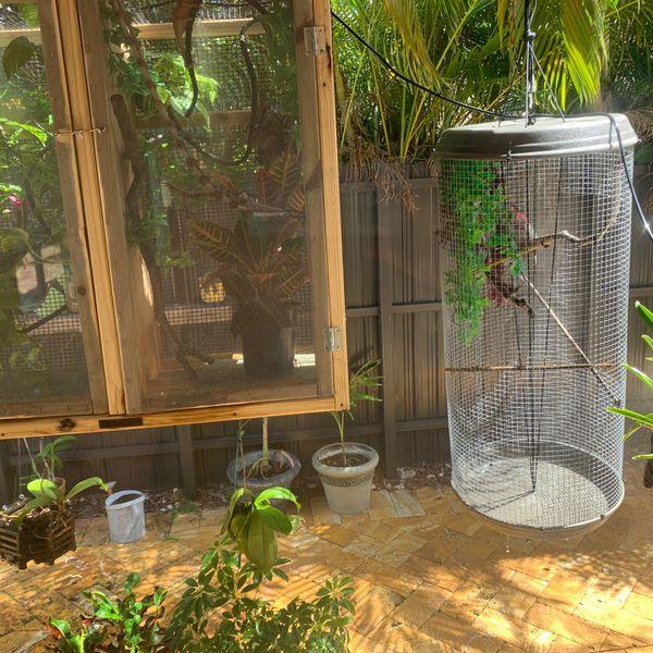 hanging chameleon/bird cage for sale