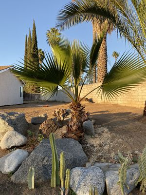 Free Palms for Sale in Riverside, CA
