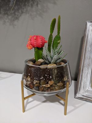 Live succulent plants arrangement for Sale in Annandale, VA