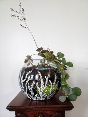Live houseplant for Sale in Plainfield, IL