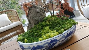 Bonsai Pot with Rock for Sale in Westminster, CA