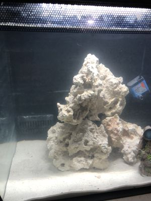 Fluval 9 Gallon all-in-one Fish Tank With Fluval Stand for Sale in Oceanside, CA