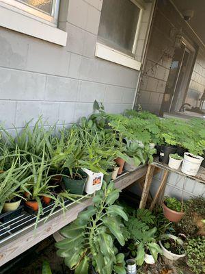 Venta de plantas for Sale in Orange City, FL