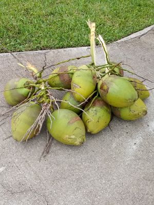 SUPER FRESH COCONUTS for Sale in Port St. Lucie, FL