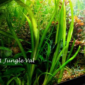 Aquarium plants package (5 species) - Live fish tank decor and water filter for Sale in Virginia Beach, VA