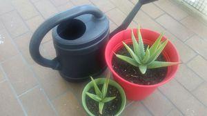 2 Aloe Vera plants w/pots & sprinkler for Sale in Miami Beach, FL